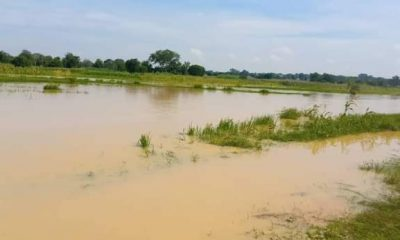 Submerged farms at Kunchi